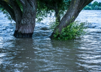 Trees in the middle of a flood